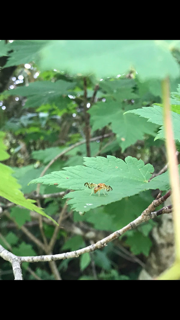 葉っぱの上でトコトコ歩いている姿がとても可愛らしい虫でした_b0025008_11073921.jpg