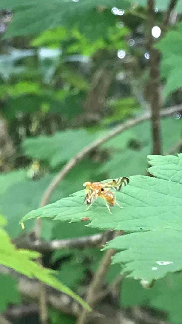 葉っぱの上でトコトコ歩いている姿がとても可愛らしい虫でした_b0025008_11075334.jpg