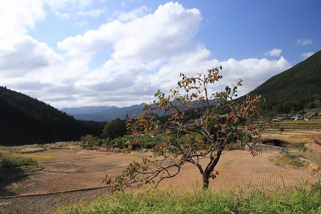 アサギマダラ蝶の里山(その1)(撮影:11月1日)_e0321325_11221596.jpg