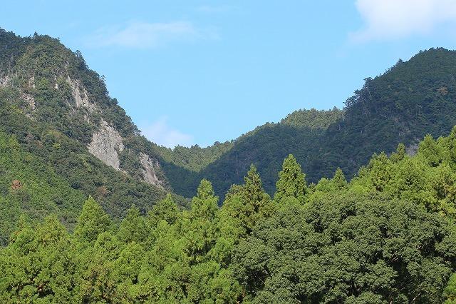 アサギマダラ蝶の里山(その1)(撮影:11月1日)_e0321325_11235355.jpg