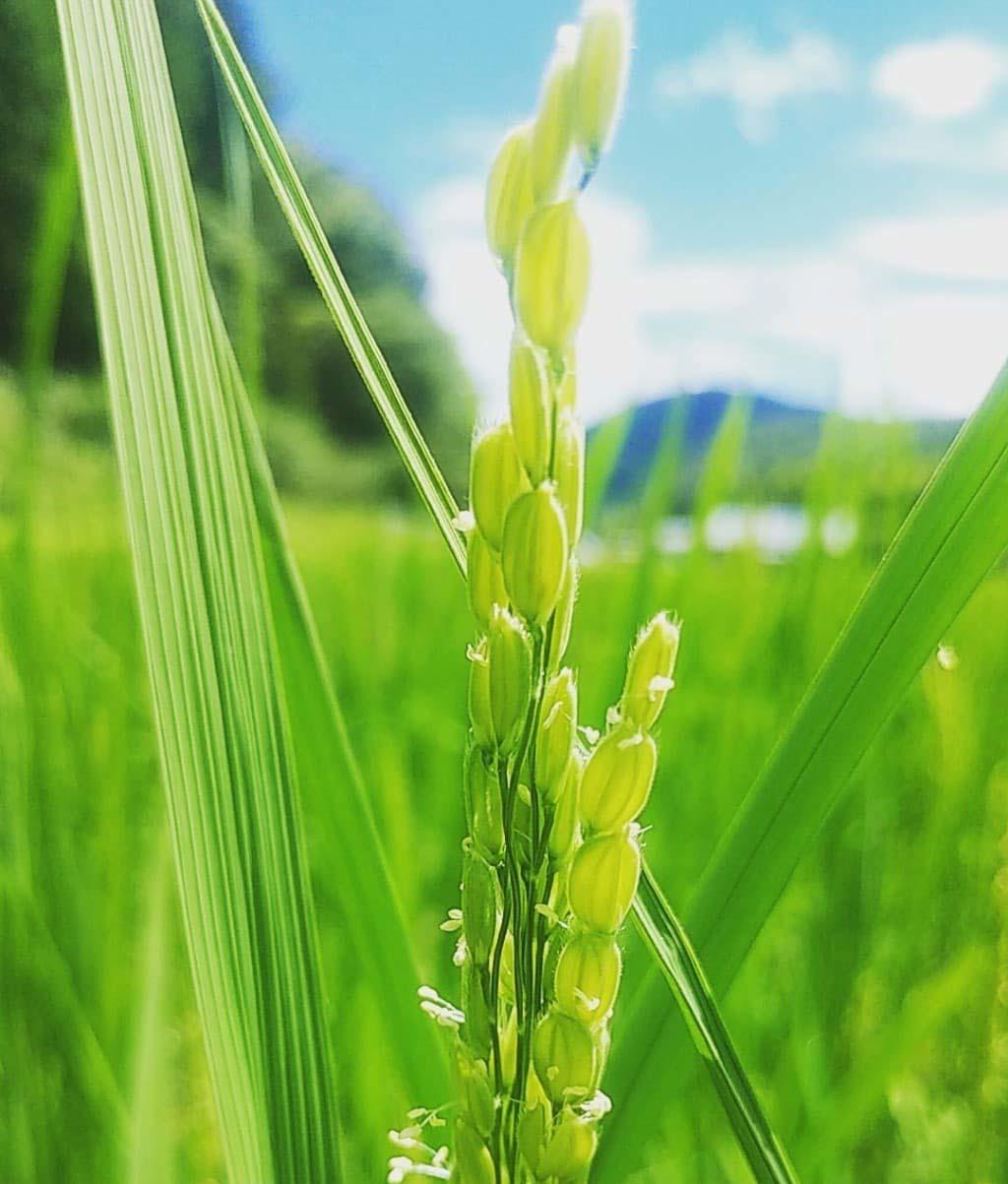 髙橋慎也 -farm to table-_d0210537_13104137.jpg