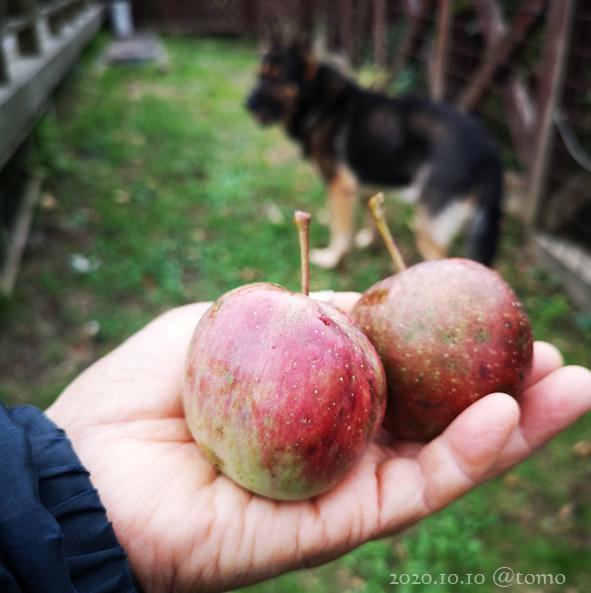 焼きリンゴ_f0067179_19353620.jpg