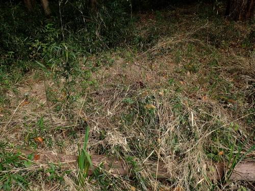キタテハの斑紋異常_f0348480_13523755.jpg