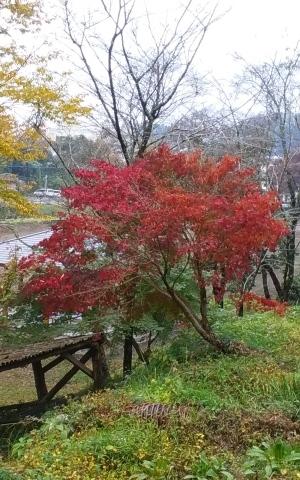 紅葉をたくさん見て来ました🍁_e0184224_08284465.jpg