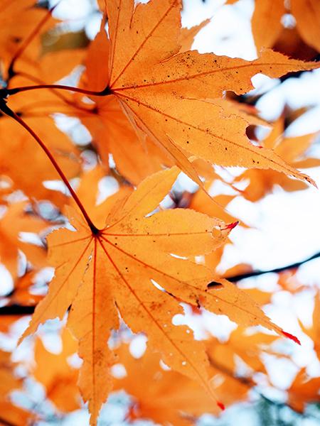 秋のオープンハウス2020.11.28sat_f0170331_12332294.jpg