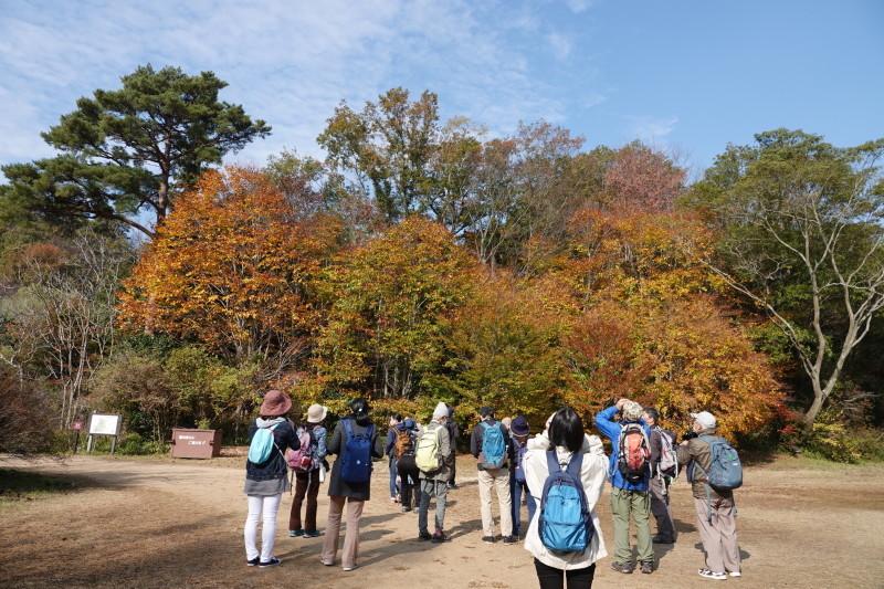 野鳥トレ 230 神戸森林植物園_b0227552_14350880.jpg