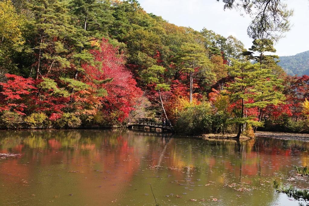 野鳥トレ 230 神戸森林植物園_b0227552_14535582.jpg