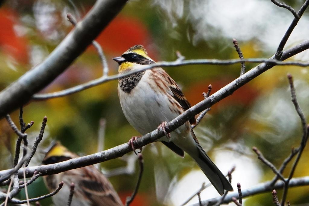野鳥トレ 230 神戸森林植物園_b0227552_14535637.jpg