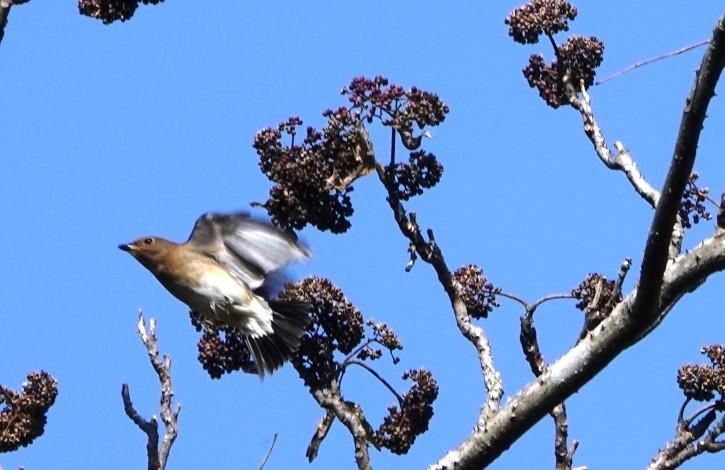 野鳥トレ 230 神戸森林植物園_b0227552_14535649.jpg