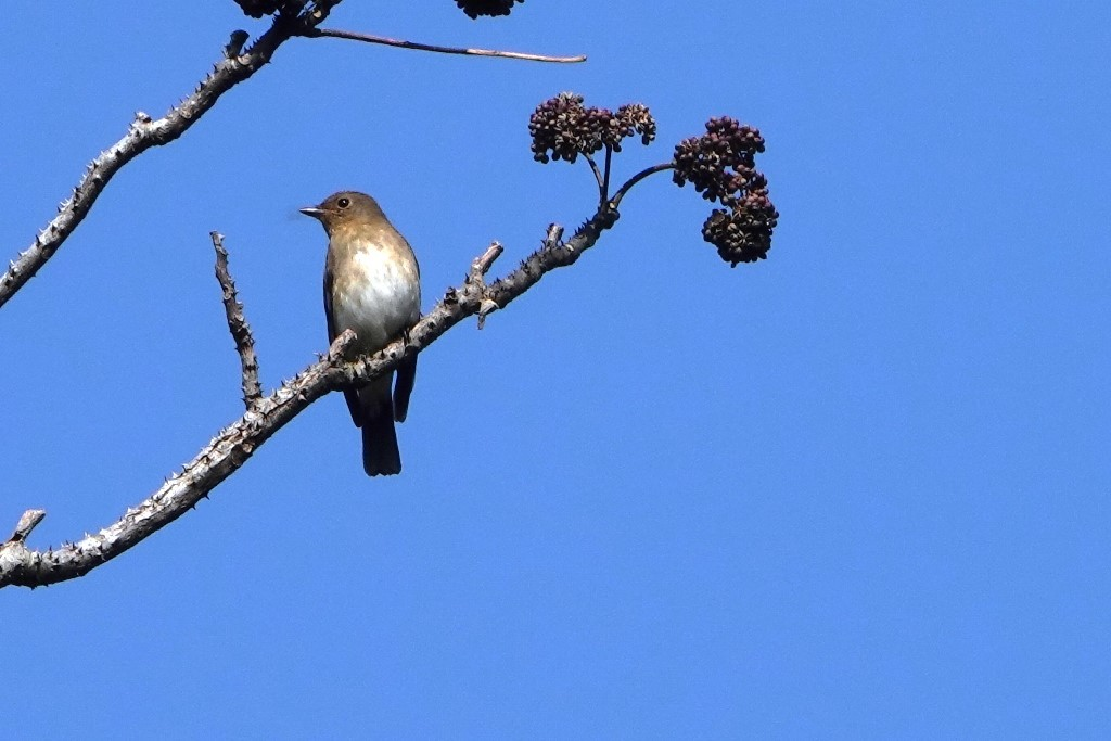 野鳥トレ 230 神戸森林植物園_b0227552_14535670.jpg