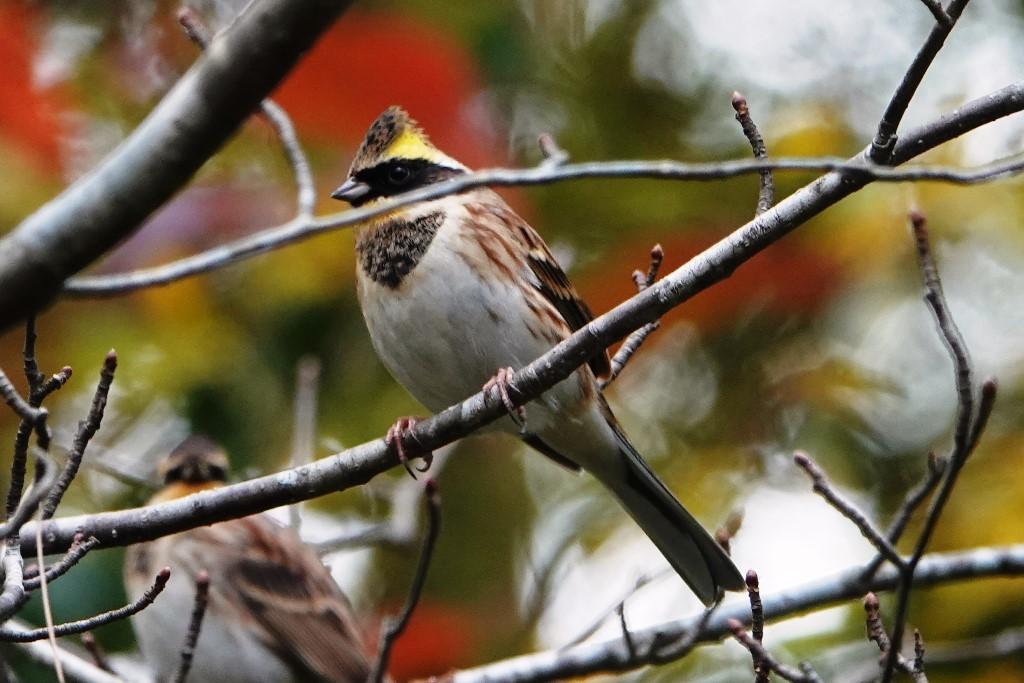 野鳥トレ 230 神戸森林植物園_b0227552_14535673.jpg