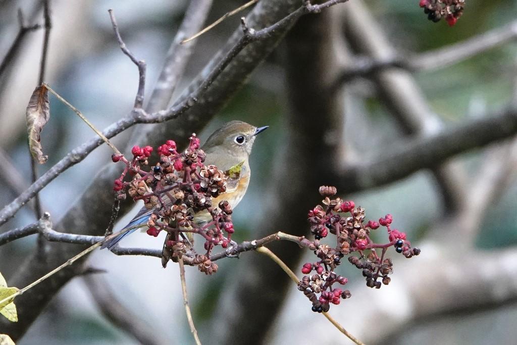 野鳥トレ 230 神戸森林植物園_b0227552_14535779.jpg