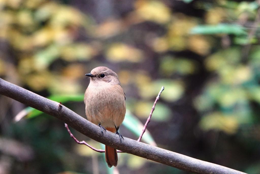 野鳥トレ 230 神戸森林植物園_b0227552_14535799.jpg