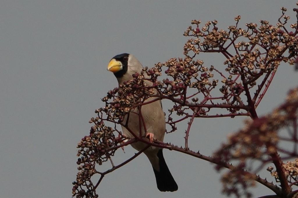 野鳥トレ 230 神戸森林植物園_b0227552_14541949.jpg