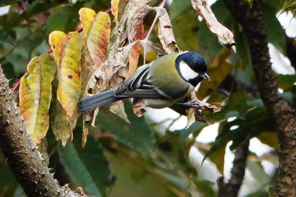 野鳥トレ 230 神戸森林植物園_b0227552_14541961.jpg