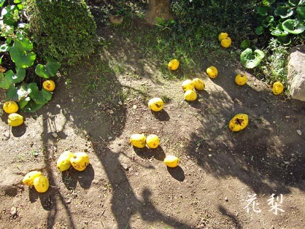 九華関頂の中国鉢植え2             No.2060_d0103457_13422183.jpg
