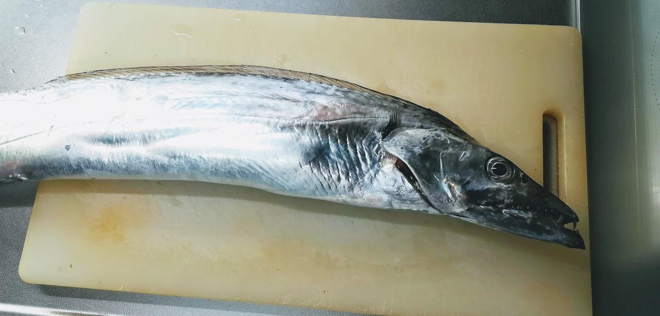 太刀魚 。。。 ! !_a0248459_15313672.jpg