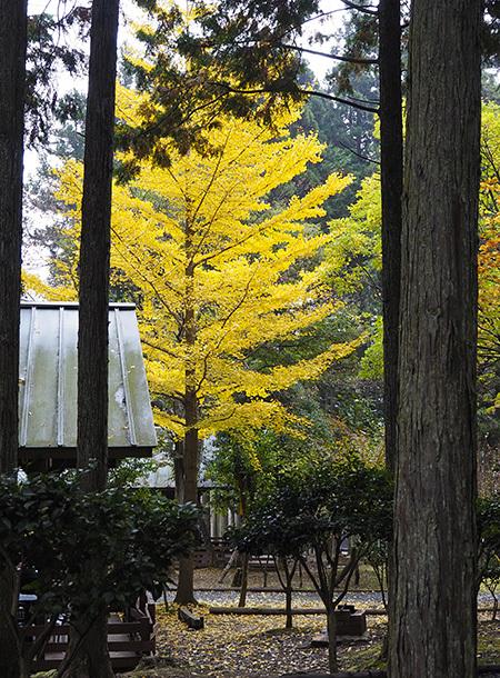 森のひとときリピート_b0035072_14070092.jpg