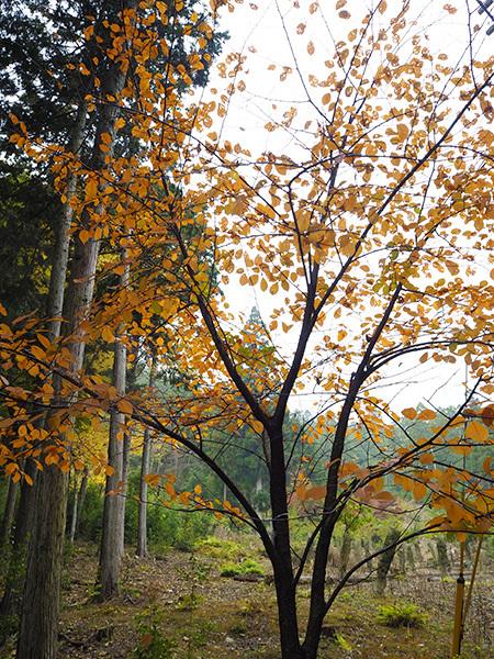 森のひとときリピート_b0035072_14070111.jpg