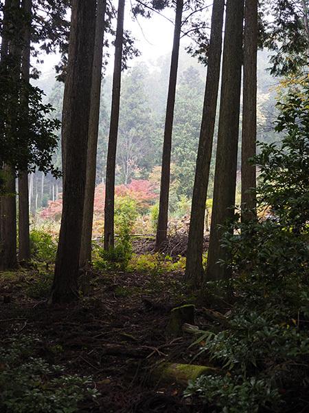 森のひとときリピート_b0035072_14070133.jpg