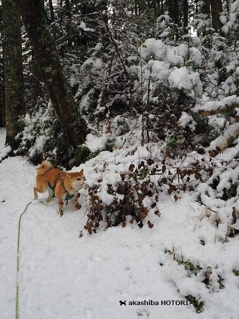 雪がきた_f0150377_14373307.jpg
