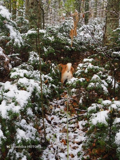 雪がきた_f0150377_14374387.jpg