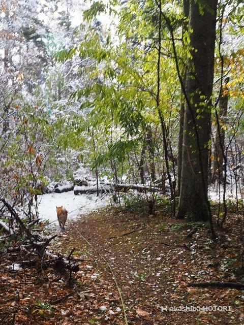 雪がきた_f0150377_14380092.jpg