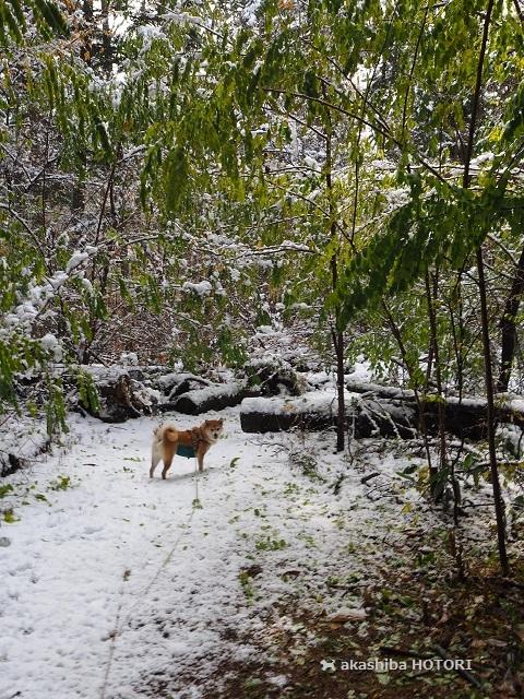 雪がきた_f0150377_14380895.jpg