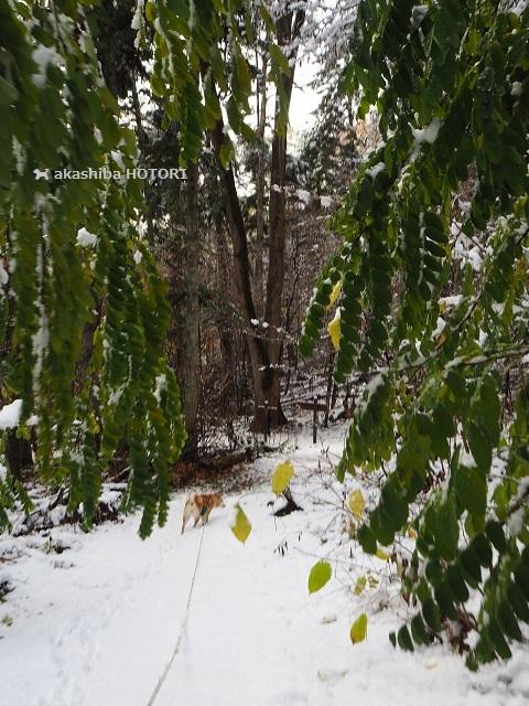 雪がきた_f0150377_14382208.jpg