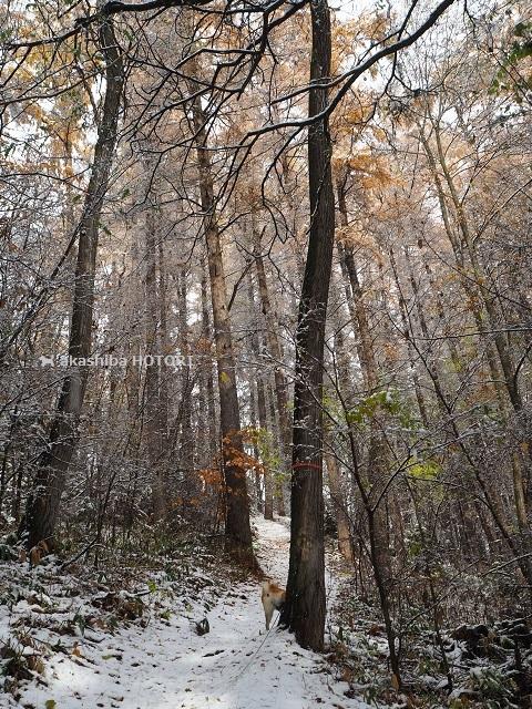 雪がきた_f0150377_14383658.jpg