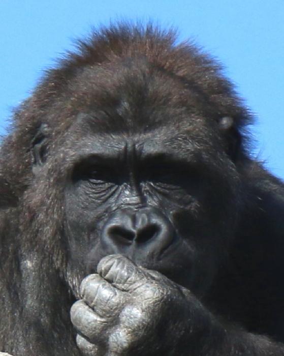 久久振りの動物園へ_e0149891_20440058.jpg