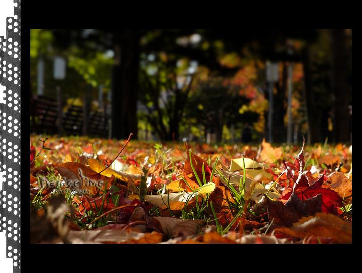 10月29日 札幌_d0246309_10132286.jpg