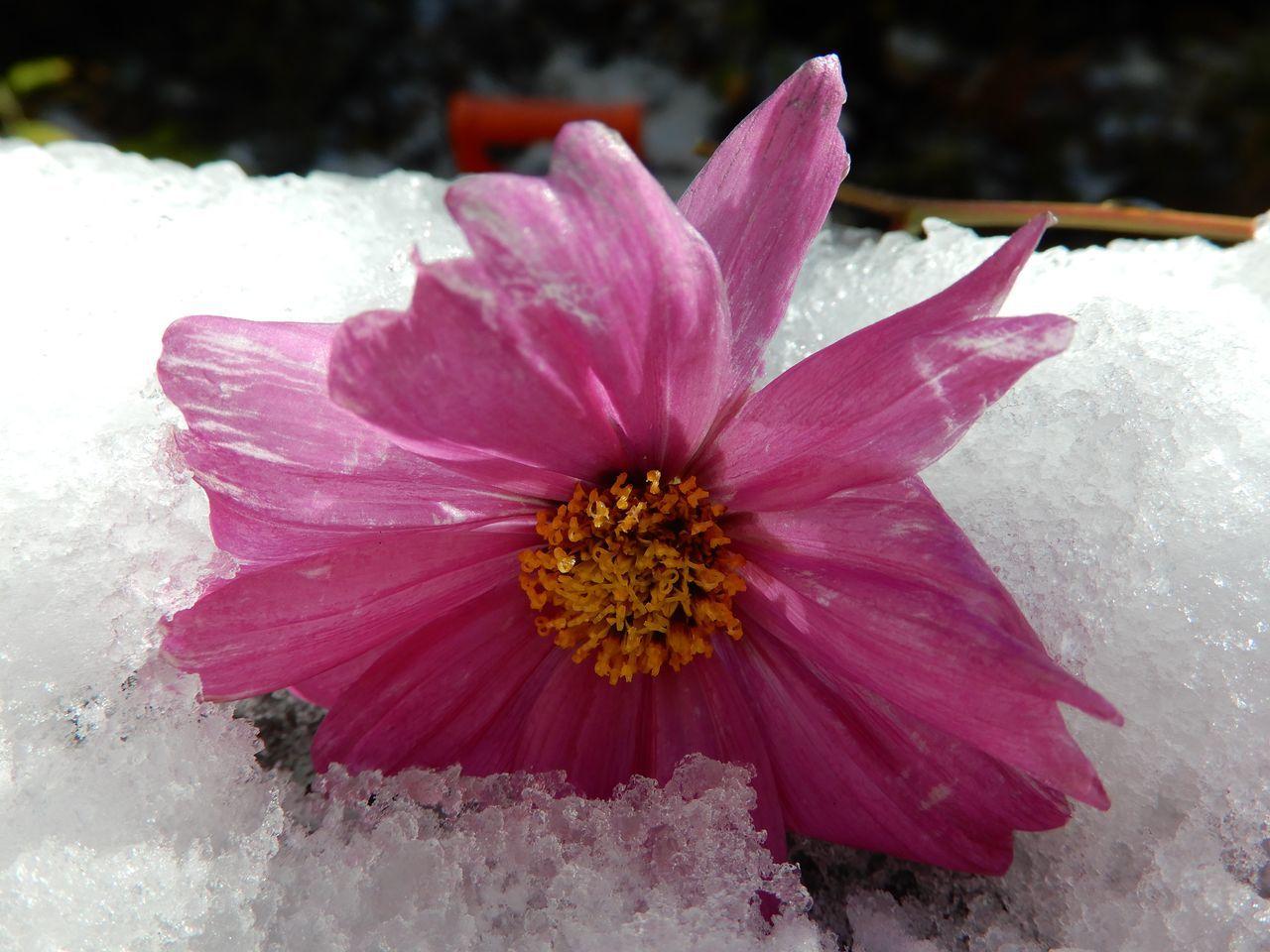 この冬一番の寒い雪景色の朝_c0025115_21081922.jpg