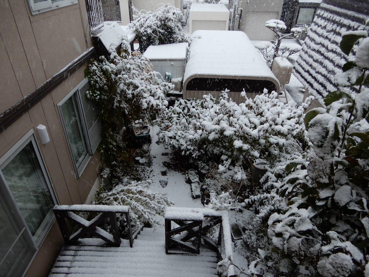 この冬一番の寒い雪景色の朝_c0025115_21112485.jpg