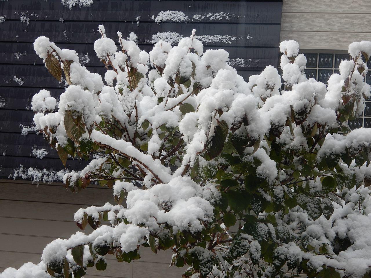 この冬一番の寒い雪景色の朝_c0025115_21113460.jpg