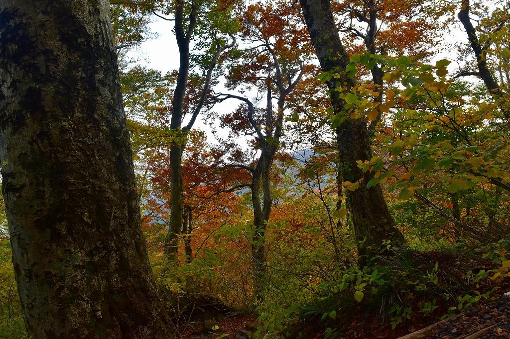 秋の大山_f0174419_20203091.jpg