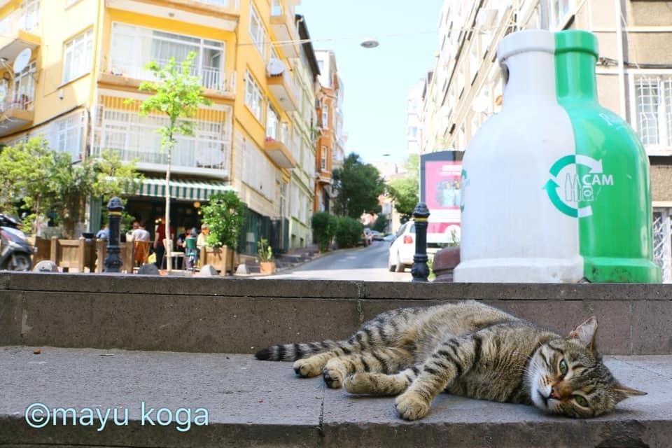 こがまゆさん×イスタンブール友好交流写真展「トルコのねこ」開催のお知らせ!_f0357923_13112940.jpg