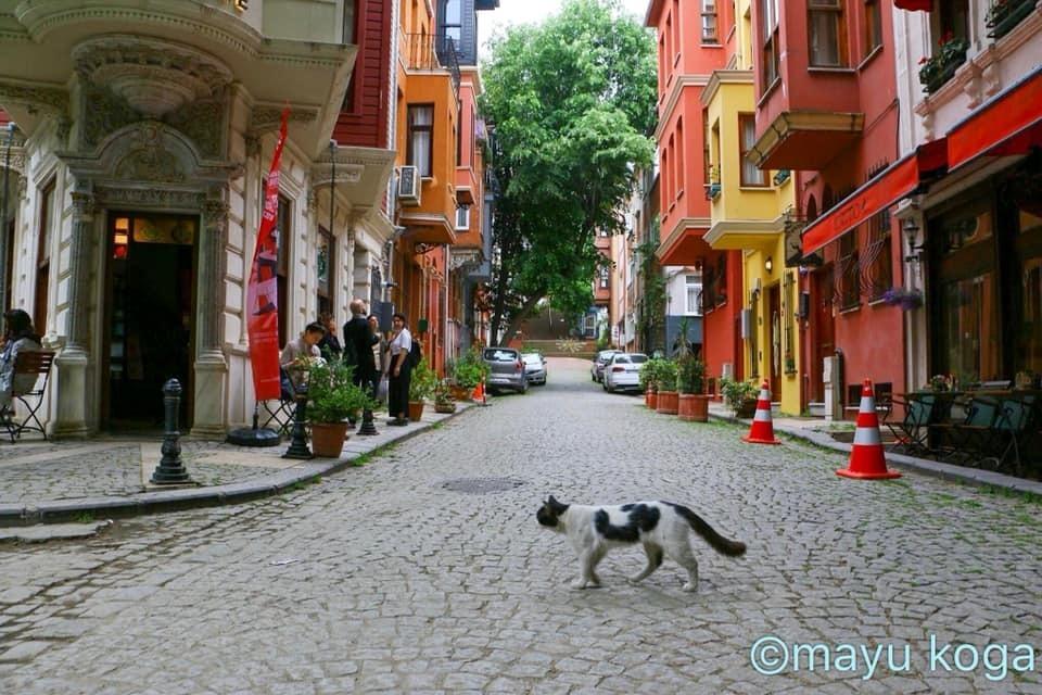 こがまゆさん×イスタンブール友好交流写真展「トルコのねこ」開催のお知らせ!_f0357923_13115858.jpg