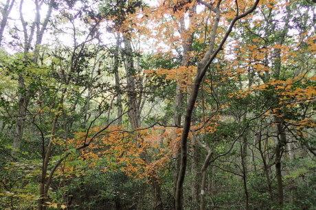 スリル満点 小野アルプス 『紅山』岩登り_c0218841_14354652.jpg