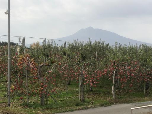 「なあんだ。」とは言つたものの、眼前に展開してゐる 秋(春)の津軽平野の風景には、うつとりしてしまつた。_d0057843_02164556.jpeg