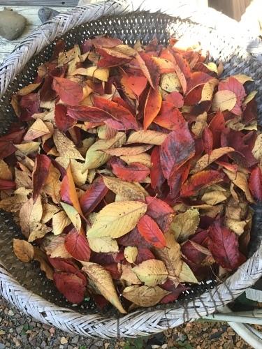秋の色ー桜紅葉_f0352451_10411950.jpeg