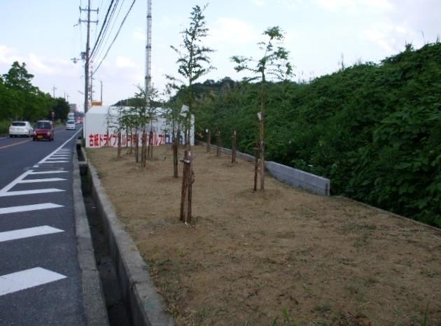 奈良クラブのホームゲームに出張ユーカリ_f0139292_14032220.jpg