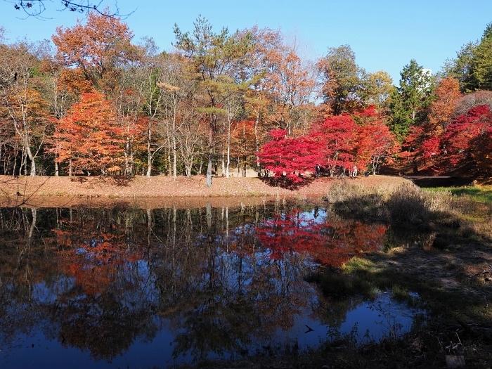 タカドヤ湿地の紅葉 2020_e0075403_19375258.jpg