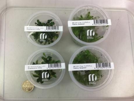 201112 熱帯魚 めだか 水草 観葉植物_f0189122_11510862.jpeg