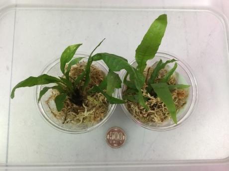 201112 熱帯魚 めだか 水草 観葉植物_f0189122_12274092.jpeg