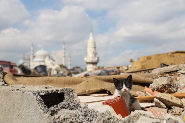 こがまゆさん×イスタンブール友好交流写真展「トルコのねこ」開催のお知らせ!_f0357923_12483492.jpg