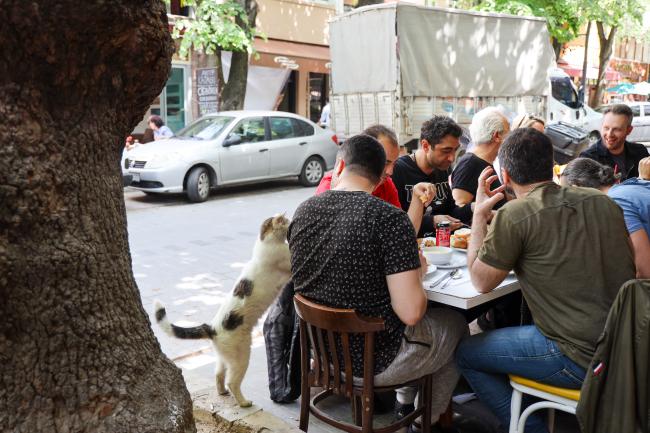 こがまゆさん×イスタンブール友好交流写真展「トルコのねこ」開催のお知らせ!_f0357923_12485611.jpg