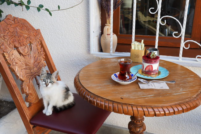 こがまゆさん×イスタンブール友好交流写真展「トルコのねこ」開催のお知らせ!_f0357923_12501506.jpg