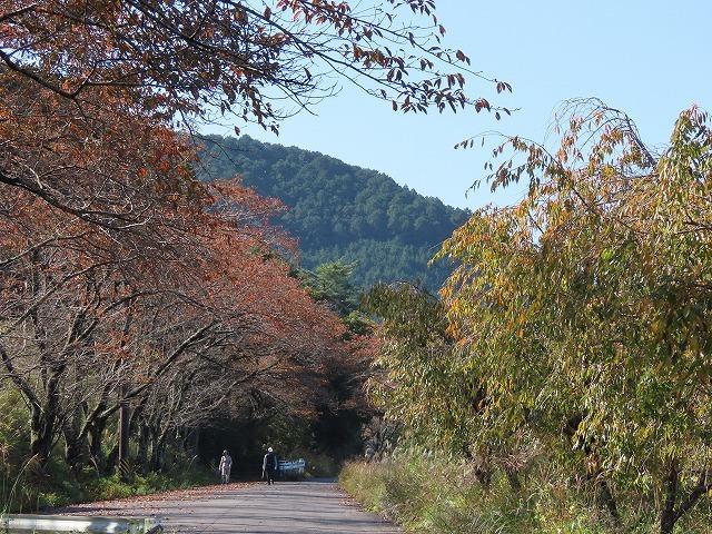 散歩で出会った光景(その1)(撮影:11月3日)_e0321325_18512322.jpg