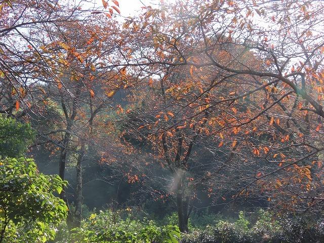 散歩で出会った光景(その1)(撮影:11月3日)_e0321325_18521211.jpg